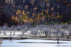 El río corre a través del prado de Ulan Buh Foto de archivo