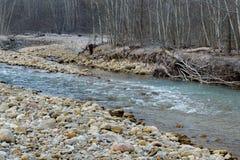 El río de la montaña Fotos de archivo libres de regalías