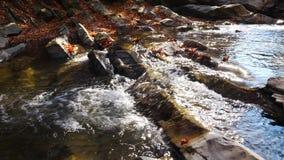 El río de la montaña con la cascada en bosque del otoño en el día soleado asombroso metrajes
