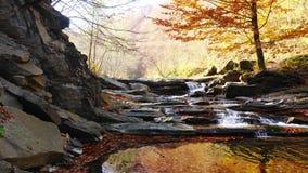 El río de la montaña con la cascada en bosque del otoño las hojas que cambian color almacen de metraje de vídeo