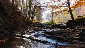 El río de la montaña con la cascada en la luz de Sun del bosque centellea en el río almacen de video