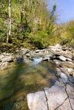 El río de la montaña con la cascada en bosque de la primavera Imagen de archivo libre de regalías
