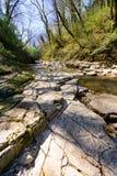 El río de la montaña con la cascada en bosque de la primavera Imagenes de archivo