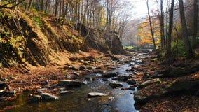El río de la montaña en bosque del otoño en el día soleado asombroso almacen de metraje de vídeo