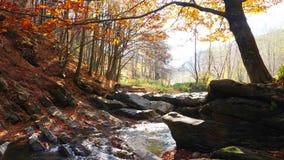 El río de la montaña en bosque del otoño y el sol que brilla a través del follaje almacen de video