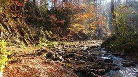 El río de la montaña en bosque del otoño y el sol que brilla a través del follaje almacen de metraje de vídeo