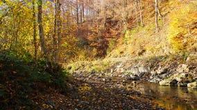 El río de la montaña en hojas coloridas del bosque del otoño metrajes