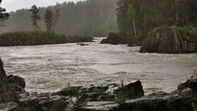 El río de la montaña, rápido atraviesa el valle de la montaña en un día de verano metrajes