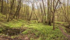 El río de Yazvenka que atraviesa el territorio del estado de Tsaritsyno moscú Federación Rusa imagenes de archivo