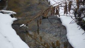 El río del campo fluye en el invierno almacen de video
