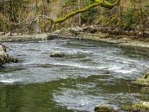 El río Doubs con los árboles cubiertos de musgo acerca a la cascada del du Doubs del saut Imagen de archivo