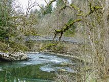 El río Doubs con los árboles cubiertos de musgo acerca a la cascada del du Doubs del saut Foto de archivo libre de regalías