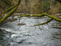 El río Doubs con los árboles cubiertos de musgo acerca a la cascada del du Doubs del saut Fotos de archivo libres de regalías