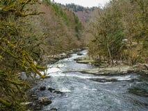 El río Doubs con los árboles cubiertos de musgo acerca a la cascada del du Doubs del saut Imagen de archivo libre de regalías
