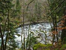 El río Doubs con los árboles cubiertos de musgo acerca a la cascada del du Doubs del saut Fotografía de archivo