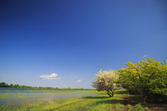 El río emergió de sus bancos en la primavera Fotografía de archivo