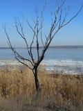 El río en el hielo Foto de archivo