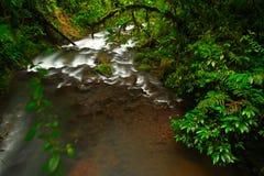 El río en el La tropical verde Paz Waterfall del bosque cultiva un huerto, con el bosque tropical verde en Costa Rica El bosque t fotos de archivo
