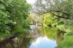 El río en la madera Fotografía de archivo