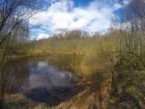 El río en la madera de la primavera Foto de archivo