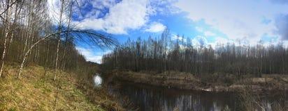 El río en la madera de la primavera, un abedul dobló sobre el agua Fotografía de archivo libre de regalías