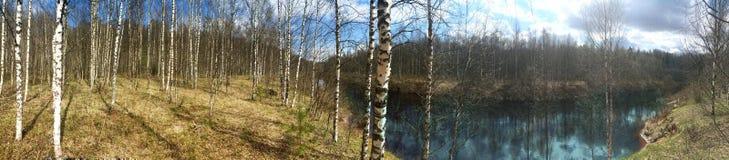 El río en la madera de la primavera, un abedul dobló sobre el agua Imagen de archivo libre de regalías