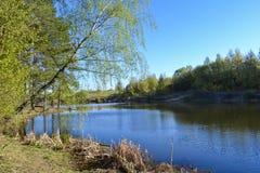 El río en primavera en un día soleado El abedul doblado sobre el agua Imagen de archivo libre de regalías