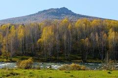 El río fluye en el pie de la montaña, cubierto con el bosque del abedul Foto de archivo