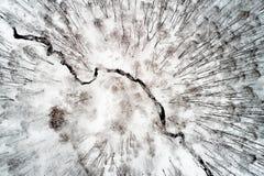 El río fluye en invierno a través de un parque con los árboles en los cuales mentira Imagen de archivo