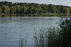 El río fluye a lo largo de las costas boscosas La bahía del río Volga cerca de la ciudad de Ulyanovsk fotos de archivo