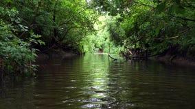 El río fluye a través del bosque almacen de video