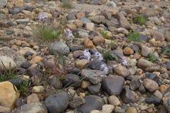 El río natural empiedra el fondo Fotografía de archivo libre de regalías