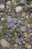 El río natural empiedra el fondo Foto de archivo libre de regalías