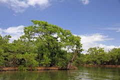 El río Orinoco foto de archivo