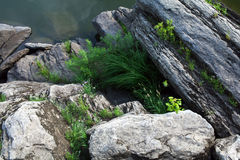 El río oscila el fondo Foto de archivo