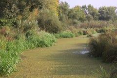 El río pantanoso Fotografía de archivo libre de regalías