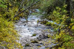 El río que fluía abajo de la montaña rodeada por las rocas y otoño coloreó las hojas imagen de archivo libre de regalías