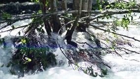 El río rápido y limpio de la primavera de la montaña estalló sus bancos y ahoga los árboles en día soleado metrajes