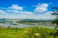 El río Rhine y viñedos verdes cerca de Bingen  Fotos de archivo libres de regalías