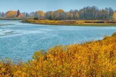 El río Snake y los álamos tembloses de oro Imagen de archivo