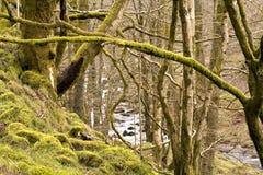 El río a través de los árboles Imagen de archivo
