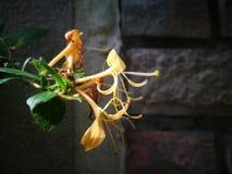 El racimo de la flor marchitada Imagen de archivo libre de regalías