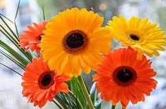 El ramo de flores anaranjadas y amarillas del gerbera se cierra para arriba, CCB del bokeh imagen de archivo