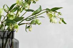 El ramo de hellebore de la primavera florece en un florero Vida floral de la primavera aún con las flores del helleborus Decoraci Fotos de archivo