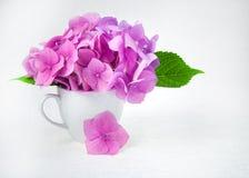 El ramo de hortensia rosada florece en una taza blanca en un fondo blanco Fotos de archivo