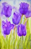 El ramo de púrpura coloreó tulipanes en un campo Imagenes de archivo