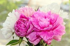 El ramo de peonía rosada y blanca florece con los brotes, vagos de la falta de definición del bokeh imagen de archivo libre de regalías