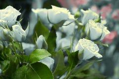 El ramo de rosas blancas y empaña el fondo Foto de archivo libre de regalías
