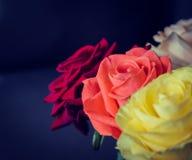 El ramo de rosas coloridas se cierra para arriba fotografía de archivo