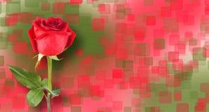 El ramo de rosas rojas con verde se va en fondo abstracto Imágenes de archivo libres de regalías